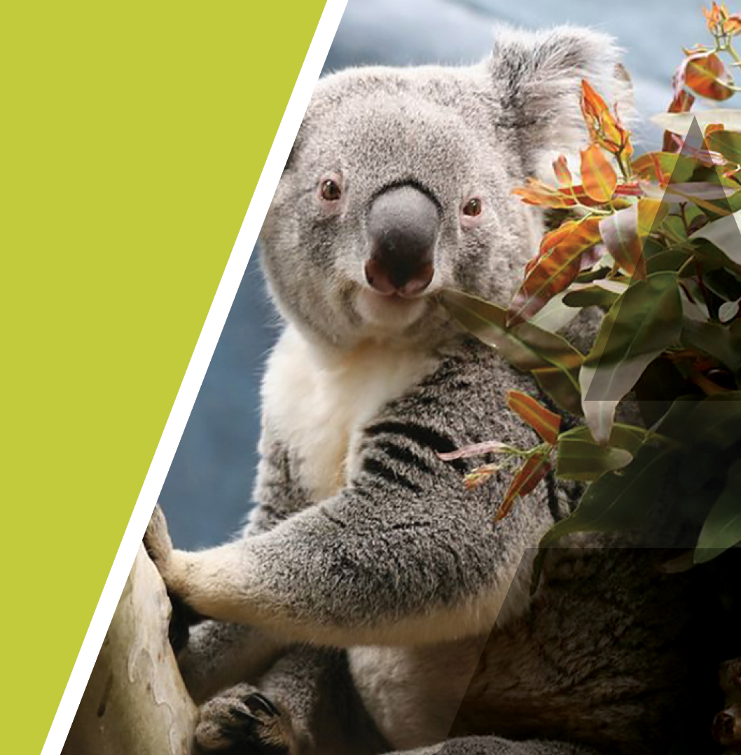 The care collection has the koala as mascot.